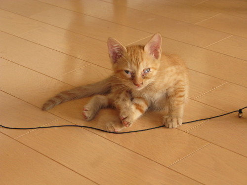 子猫が我が家にやってきた